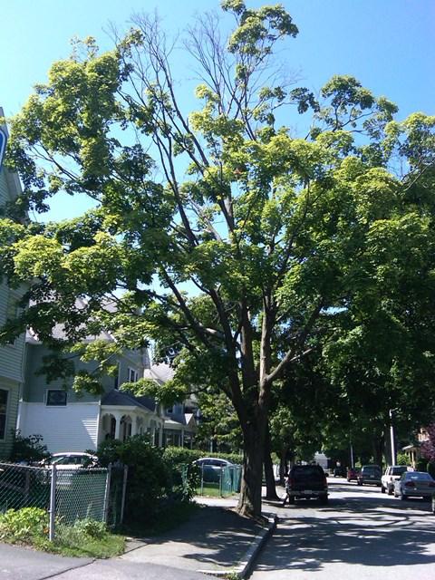 tree_tb